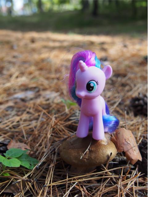 pony14